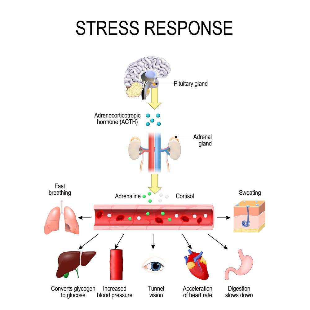 Stress response(Designua)S