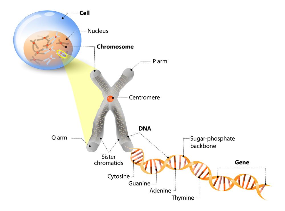 Cell Structure(Designua)s