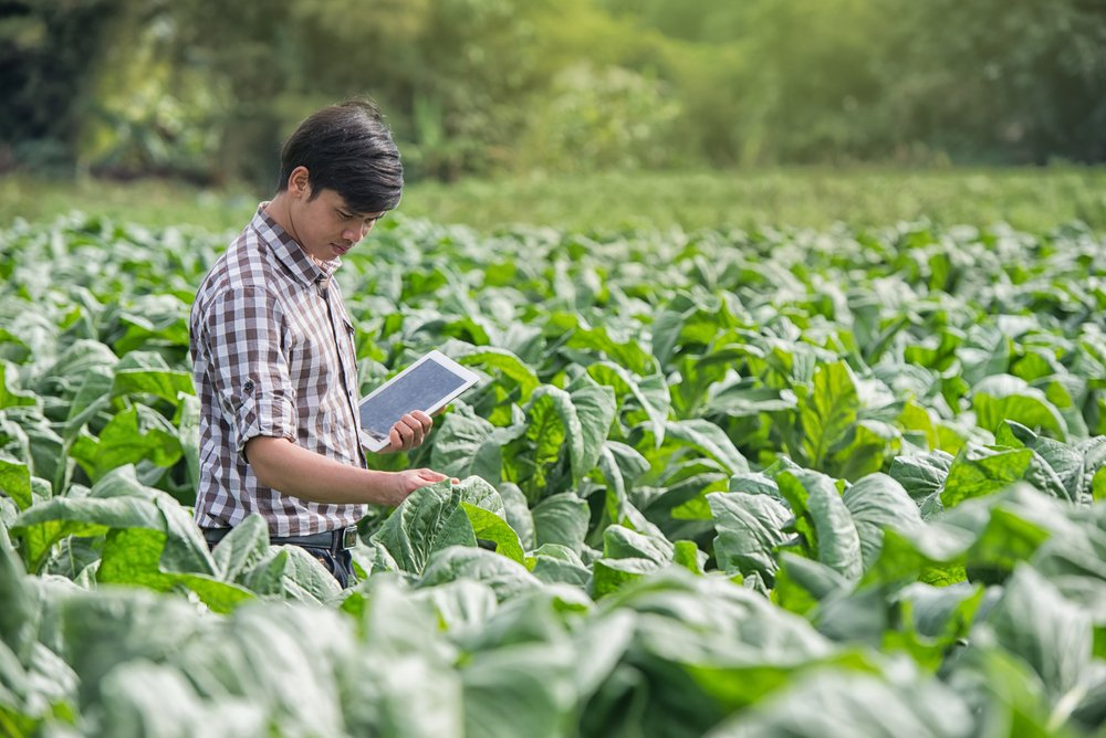 Happy Farmers using digital tablet in the cultivation of tobacco(KOBE611)s