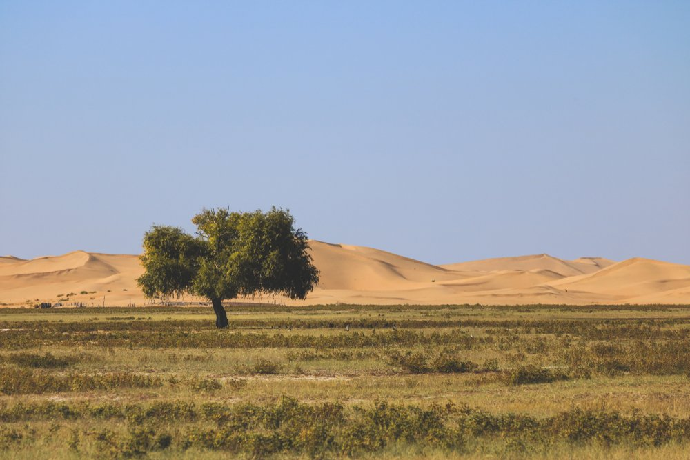 Inner Mongolia Kubuqi Desert National Park(HelloRF Zcool)s