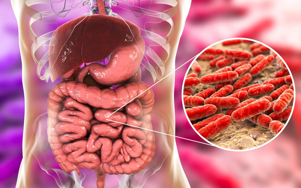 Normal flora of small intestine, bacteria Lactobacillus(Kateryna Kon)s