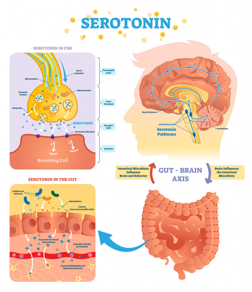 Serotonin vector illustration(VectorMine)S