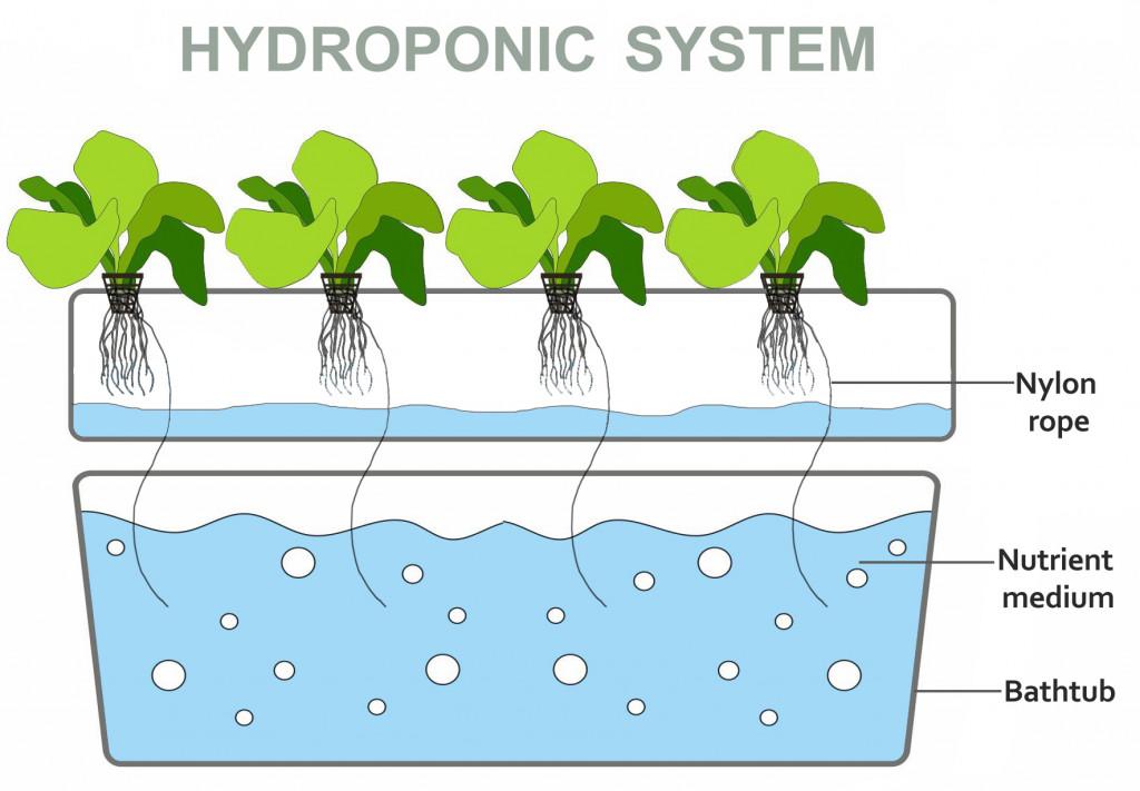Hydroponics(Anya_Samo)s