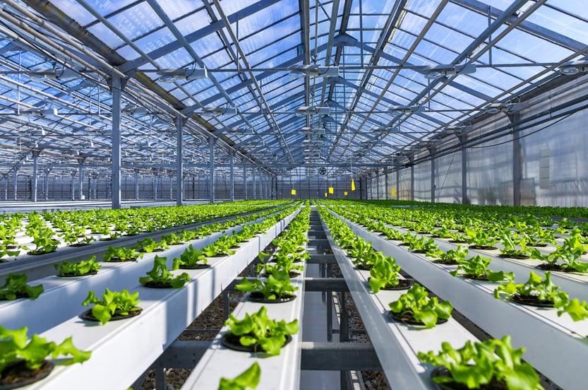 Organic,Hydroponic,Vegetable,Cultivation,Farm