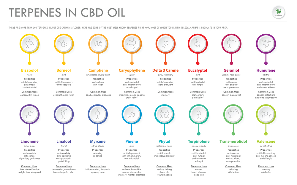 Terpenes,In,Cbd,Oil,With,Structural,Formulas,Horizontal,Business,Infographic