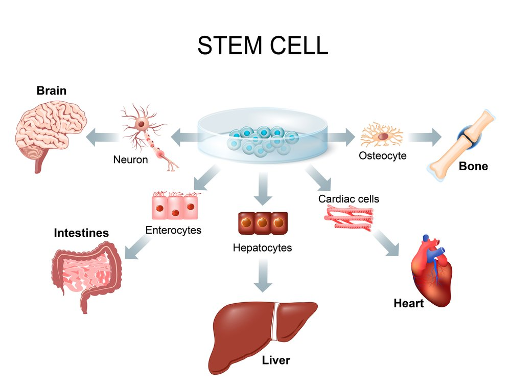 Stem,Cell,Application.,Using,Stem,Cells,To,Treat,Disease