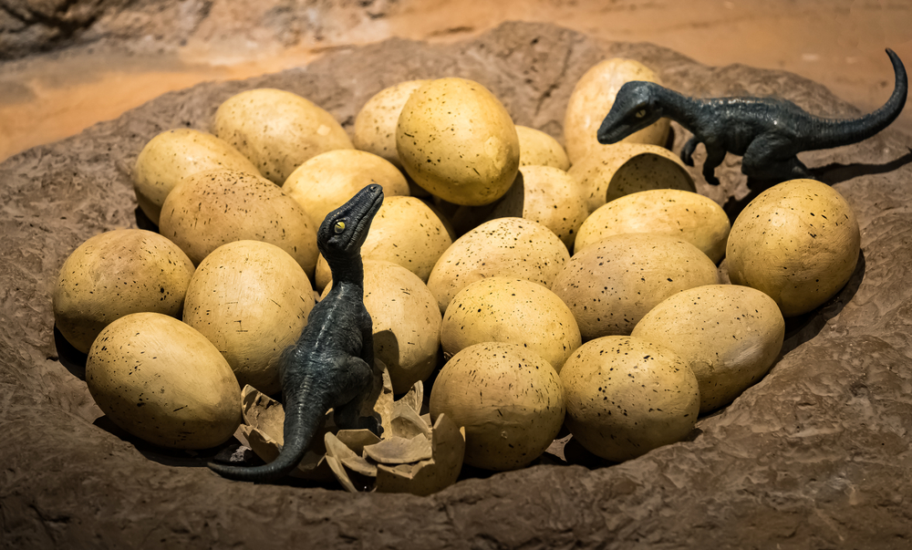 Dinosaur eggs with new born tyrannosaurus rex babies(Marco Foto)s