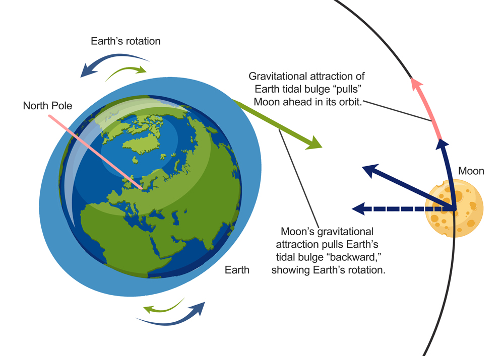 Earth's bulge increases the radius of the moon's orbit around our planet
