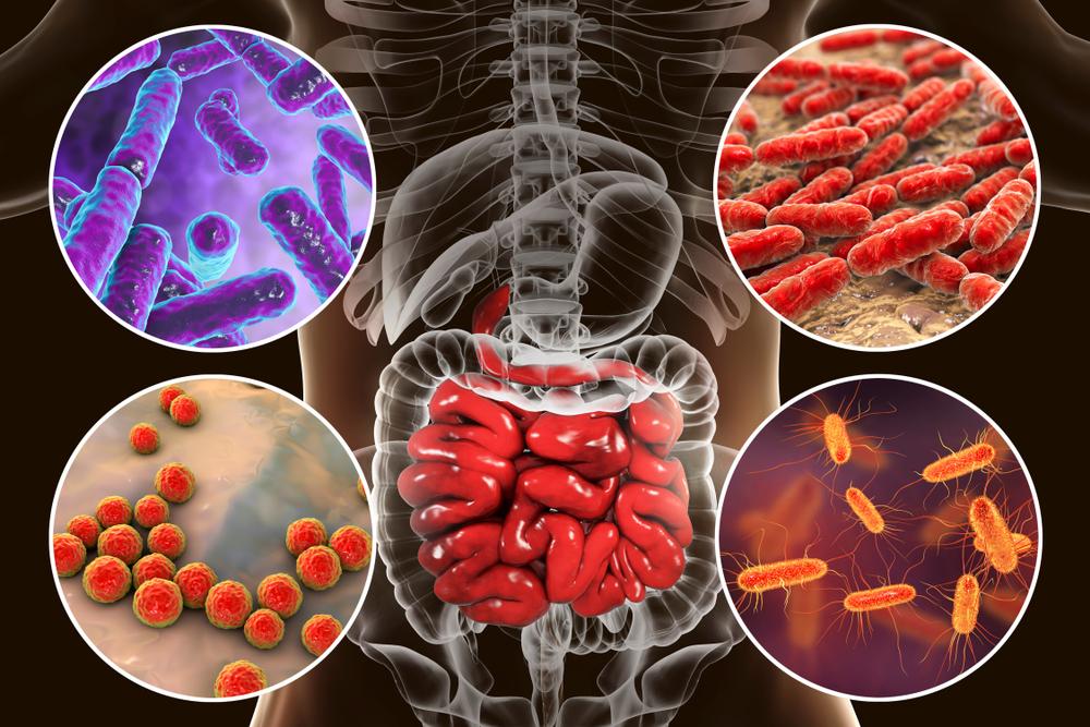Intestinal microbiome(Kateryna Kon)s