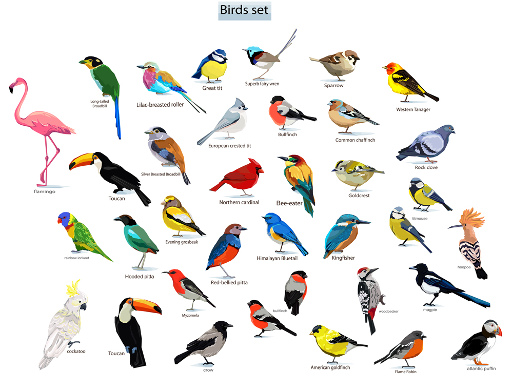 big set birds(Alsu Art)s