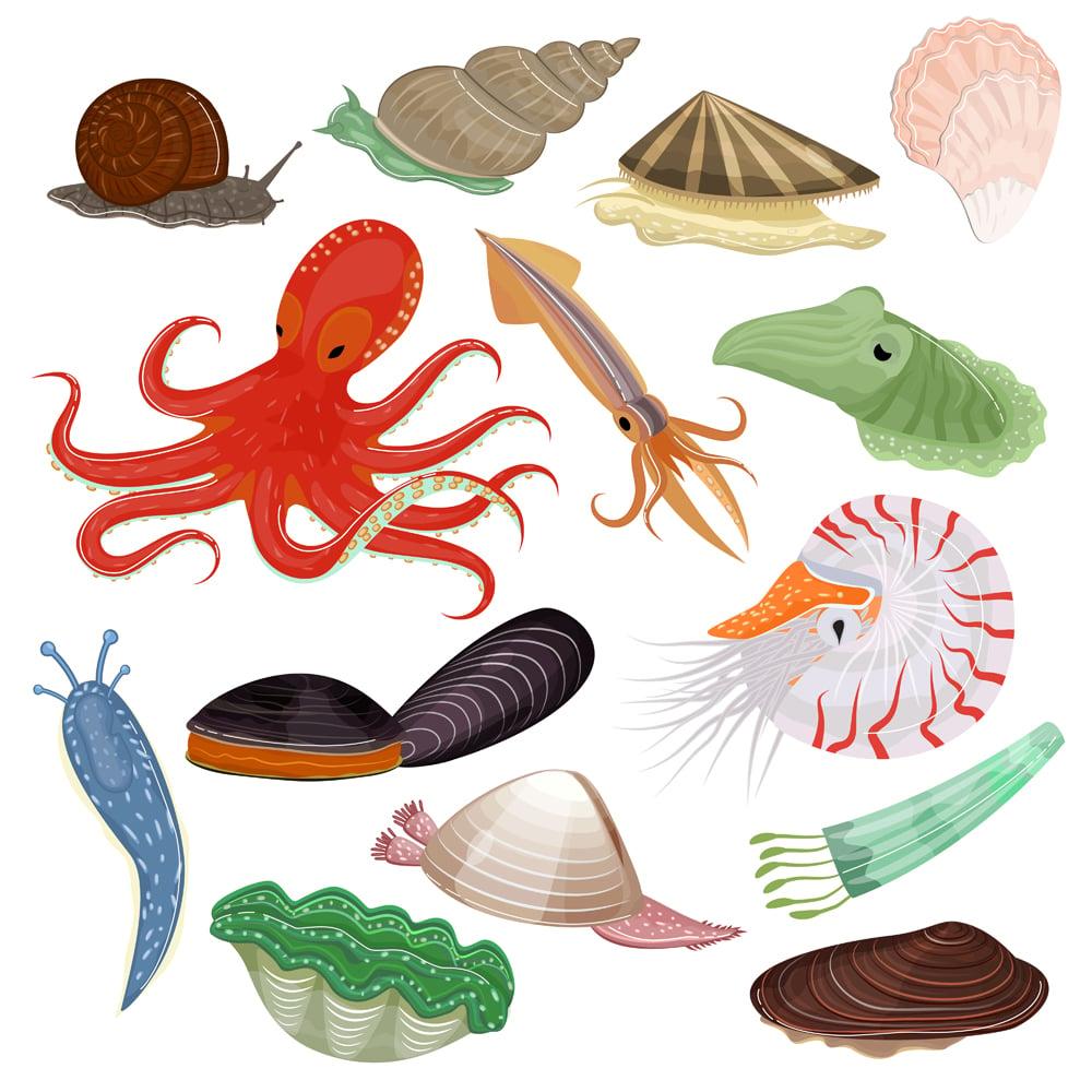 Shellfish,Vector,Marine,Animal,Octopus,Molluscs,Tentacle,And,Animalistic,Character