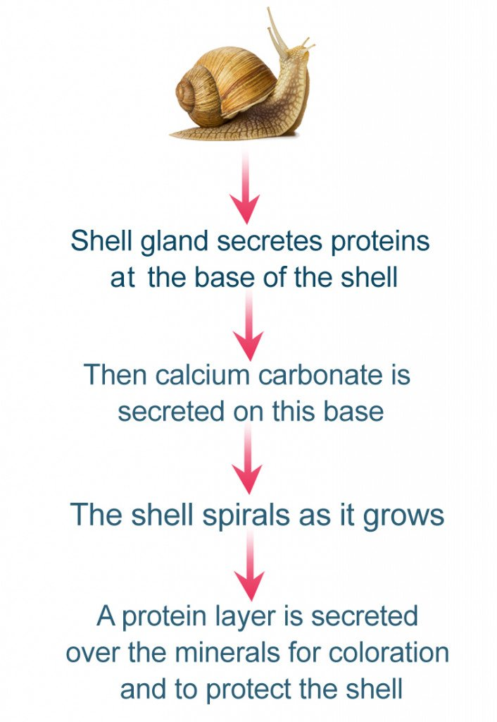 snail infographic