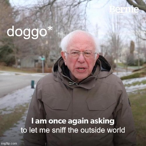 to let me sniff the outside world meme