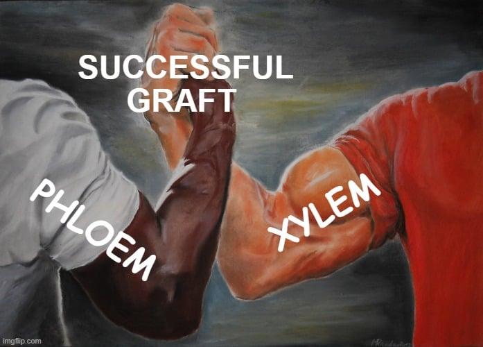 SUCCESSFUL GRAFT meme