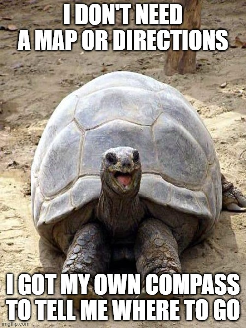 The happy turtle knows what journey awaits him.