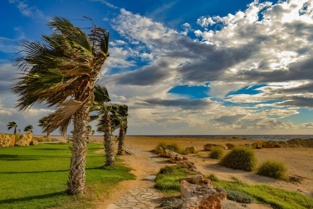 Palms do pretty well in the face of violent storms.