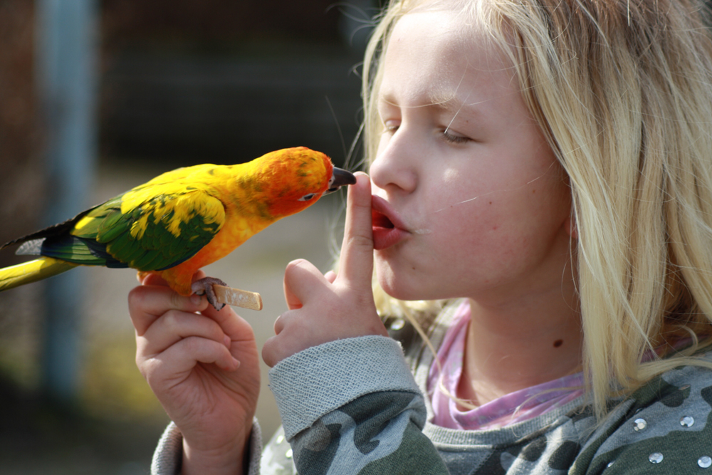 birdlover