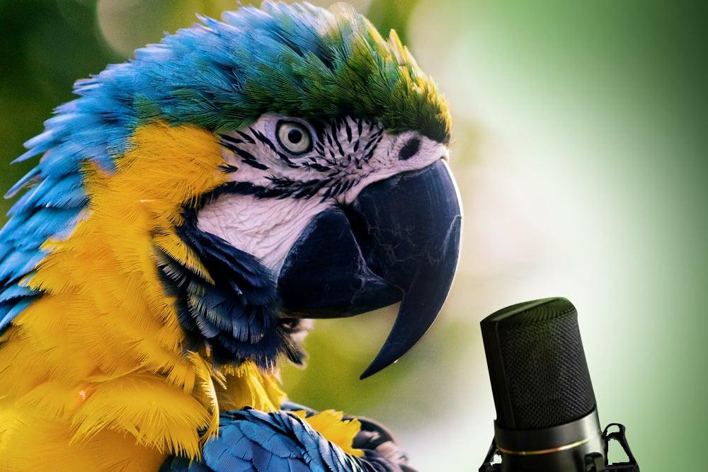 parrot mimics voice