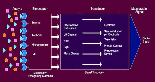 Biosensor Breakdown