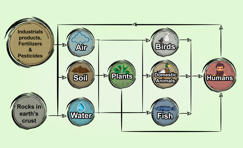Diagram,Showing,Sources,Of,Heavy,Metals,And,Their,Cycling