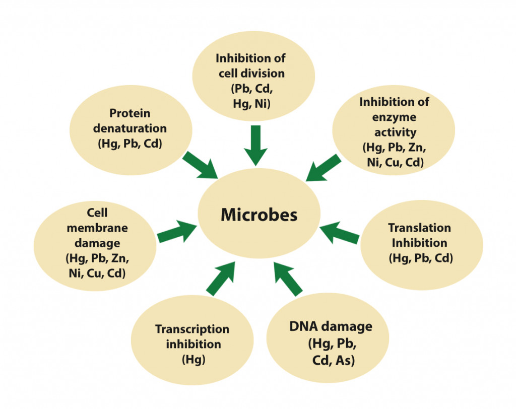 Effect of different heavy metals on microbial metabolism