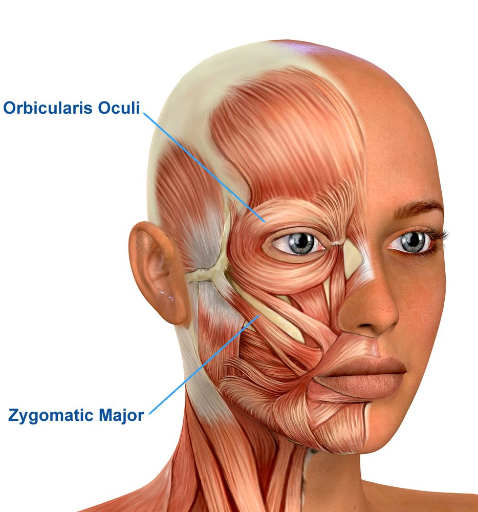 Female Face Muscles Anatomy