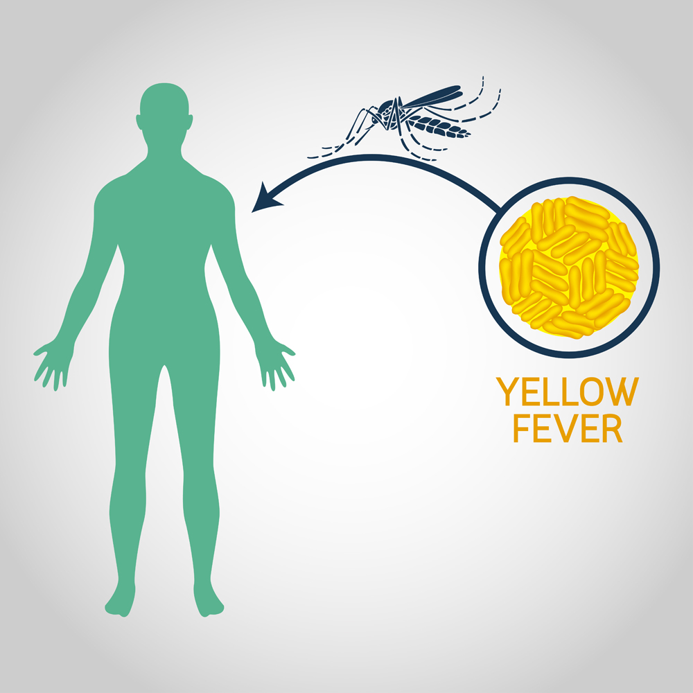 Yellow,Fever,Vector,Logo,Icon,Illustration