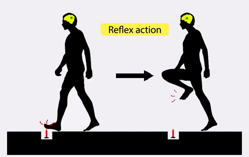 An example of reflex action
