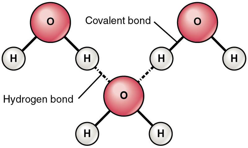 Hydrogen Bonds Between Water Molecules