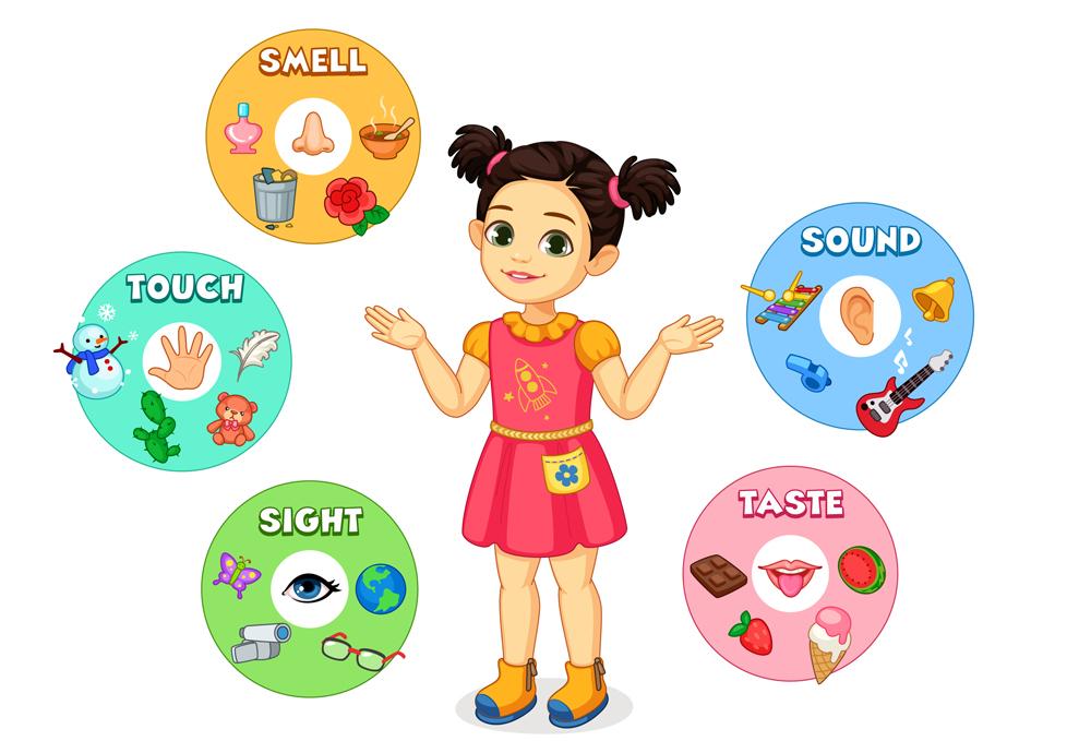 Little girl showing five senses chart vector illustration
