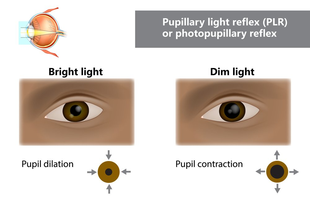 Pupillary light reflex PLR or photopupillary reflex. How do pupils change in size with dim and bright light. Function of Iris and Pupil