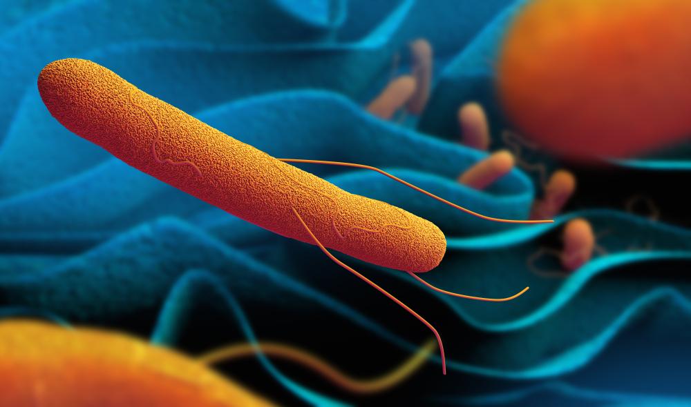 3d,Illustration,Of,Salmonella,Bacteria
