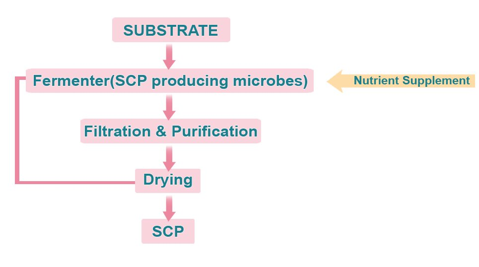 The image outlines the steps of SCP production. The process includes fermentation, filtration, purification, drying and processing.